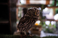 Owl café,  Akihabara-Tokyo. The concept is roughly the same as a cat café, you pay an entry fee and enjoy a drink and a snack while interacting with the animals. The rules are a little stricter than at cat and dog cafes though. Only a certain amount of people are allowed in at the same time and you're not allowed to touch the animals without a member of staff present