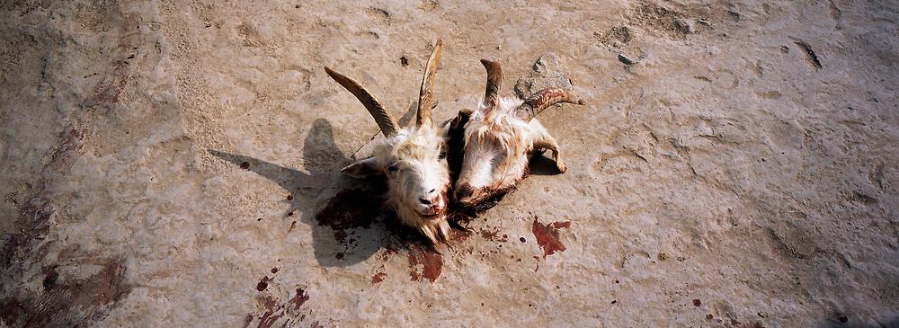 Goats after sacrificial slaughter, Waudaolinzi village, Ningxia Province, China