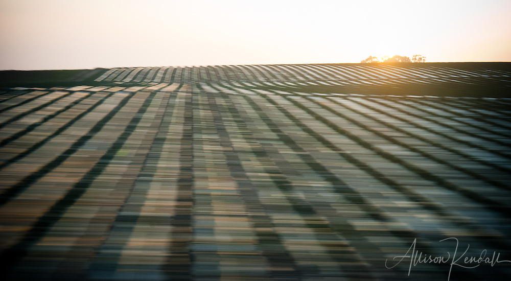 Agricultural land at sunset, viewed with a bit of speeding motion effect, creates an illusion of woven light and shadow