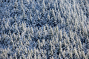 Snow blankets a forest of trees in Queenstown, New Zealand