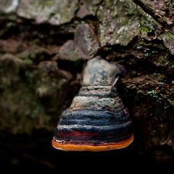 Mushroom on Fallen Tree, Shaw Island, Washington, US