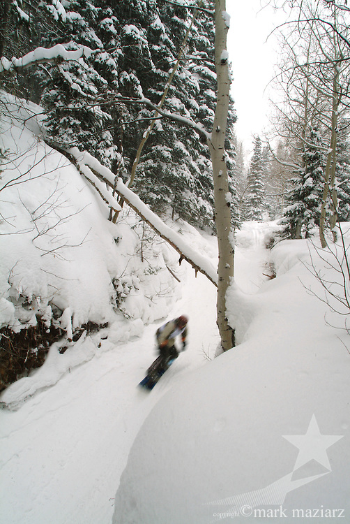 Canis Lupus snowboard race in trees and snow at The Canyons