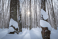 New fallen snow covers the forest floor in Michigan's Upper Peninsula