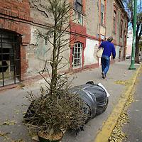 Toluca, México.- Comienzan a dejar árboles de navidad en la calle, como es el caso en avenida Humboldt que abandonaron el adorno navideño.  Agencia MVT / Crisanta Espinosa