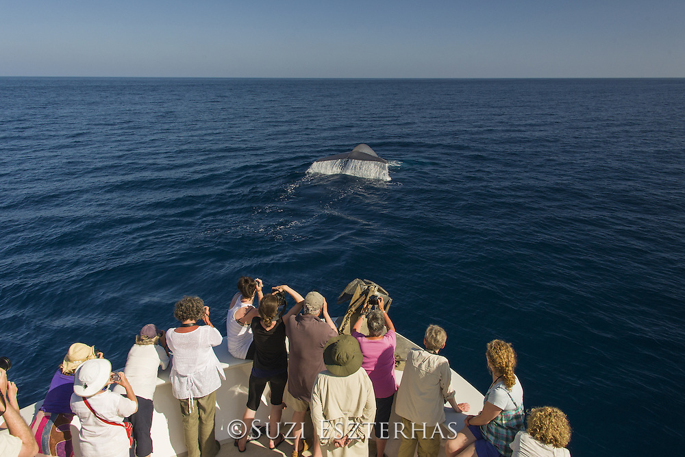 Blue Whale <br /> Balaenoptera musculus<br /> Whale-watcher with blue whale<br /> Baja California, Mexico