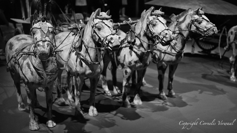 """An amazingly lifelike span of horses from the Qin dynasty (221-206 B.C. ) on display at the Metropolitan Museum of art in the exhibit """"The Age of Empires"""""""
