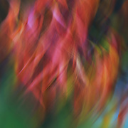 &quot;Colour Swirl&quot;<br /> <br /> Amazing colorful abstract artwork in a beautiful flowing form!