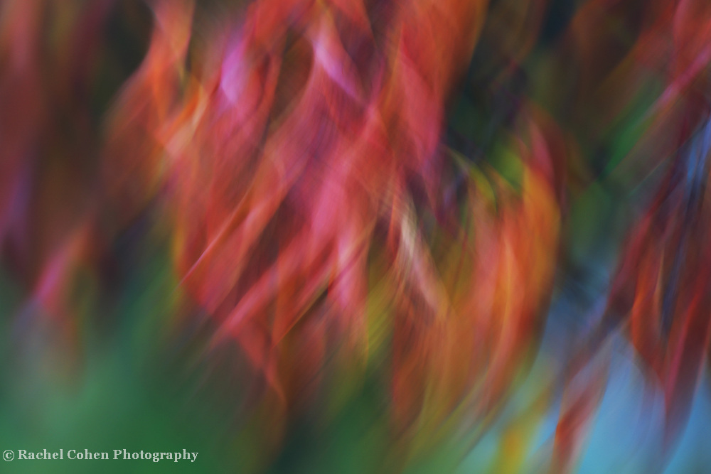 &quot;Colour Swirl&quot;<br />