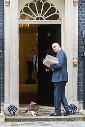 Downing Street, London, August 2nd 2016. Tensions appear to be ongoing in Downing Street as Larry the cat from No. 10 and Palmerston, newly resident at the Foreign Office continue their territorial feud. PICTURED: Larry retreats to the safety of No. 10.
