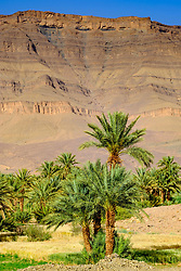 An oasis near Zagora in southern Morocco<br /> <br /> (c) Andrew Wilson | Edinburgh Elite media