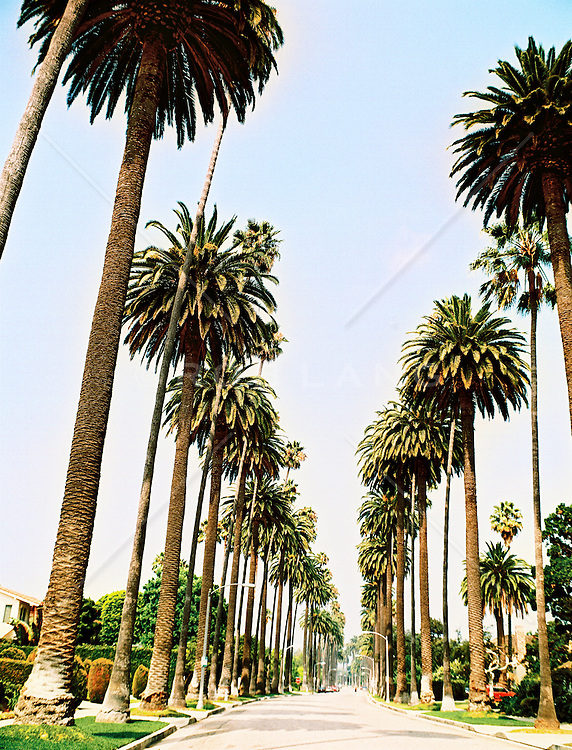 Boulevard lined with palms, Los Angeles, California