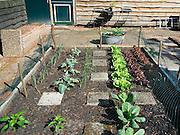Nederland, Ubbergen, 20-05-2014Moestuin in de achtertuintuin van de fotograaf. Er staan aardbeien, uien, prei, tomaten, andijvie, sla, witte kool. Een net is gespannen om vogels te beletten aan de planten schade toe te brengen.Foto: Flip Franssen/Hollandse Hoogte