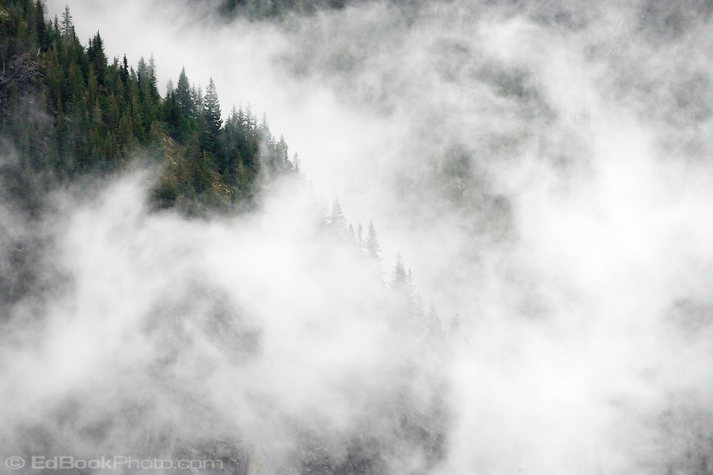 Clearing clouds reveal precipitous  cliffs, in Stevens Canyon Mt Rainier National Park, Washington, USA