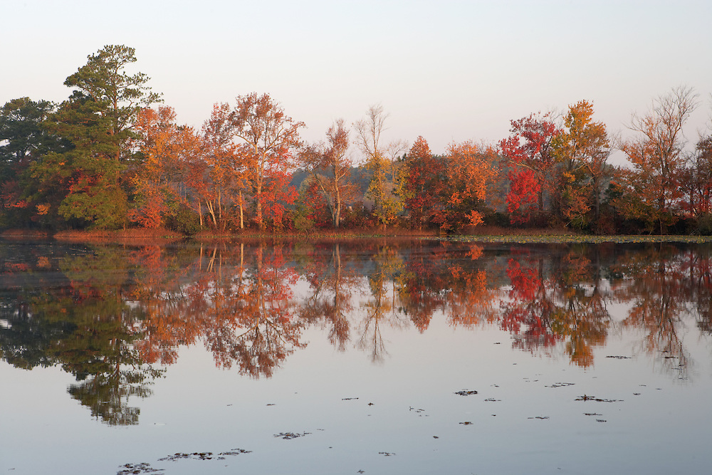 Fall foliage at its peak surrounding Burton's Pond in Sussex county, Delaware.