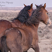 BENJAMIN'S PORTFOLIO<br />