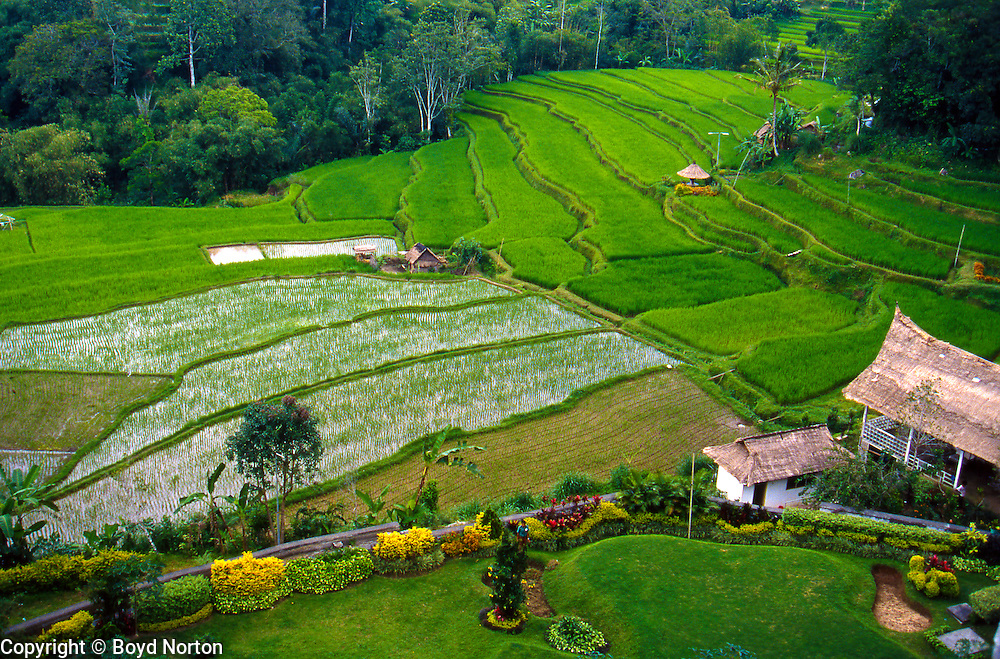 Rice terraces and resort, Bali, Indonesia