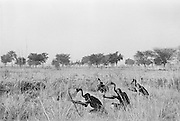 Hausa People Stalking birds, Nigeria, Africa, 1937