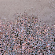 Tree tops in pink sunset, Auvergne