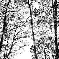 Forest in Bhutan