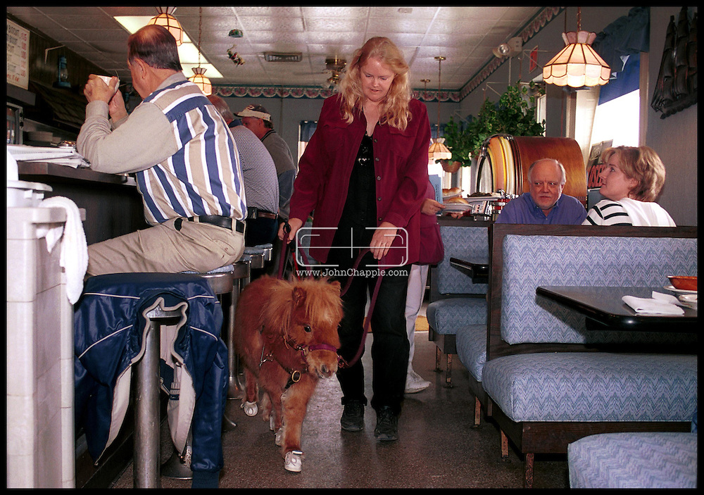 1st February 2001, Kittrell, North Carolina. Cuddles a pigmy horse, who is the first guide horse for the blind, pictured in a diner with Janet Burleson . <br /> <br /> Photo Copyright John Chapple / www.JohnChapple.com