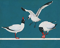 This endlessly charming scene depicts two Blackheaded Seagulls and one Sabine Seagull. You will find something sweetly hypnotic about this visual, in which the three seagulls are shown in some form of activity. A scene such as this can make one think of warm days. It can make one imagine a vacation by the seaside. -<br />