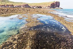 A healthy algal reef on the south side of Macleay Island on the Kimberley coast.