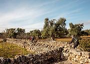 PUGLIA , ITALY, in the countryside near Montalbano