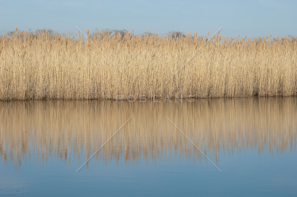 reflection of grass on a pond in Southampton, NY