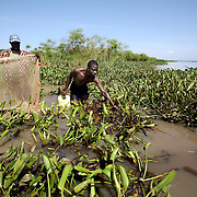 Fisherman Carilus Odera, 45, and Juma Steven (right) use nets to collect mud fish from the thick blankets of water hyacinth. Mud fish, used for bait, have appeared in Lake Victoria for the first time because of the water hyacinth infestation. Pollution of the lake is causing water hyacinth to grow out of control and is a sign of the environmental problems affecting the lake.