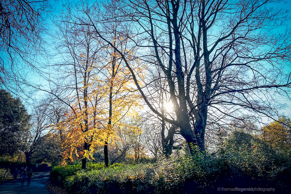 The low winter sun shines through the bare branches of a tree, while beside it another tree still hands onto it's fall coloured leaves