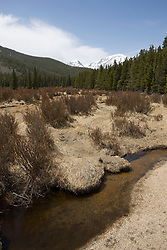 A small stream flows through grasslands near Bierstadt Lake.  Rocky Mountain National Park (RMNP), founded by act of the US Congress in 1915, contains 72 named peaks above 12,000 feet in elevation including the tallest mountain peak in Colorado - Longs Peak at 14,259 feet.  The park, located next to Estes Park, CO, has five visitor centers and is traversed by the Trail Ridge Road (US highways 34 and 36).  Over 3 million visitors travel to the park annually to experience diverse mountain terrain, wildlife and recreation.