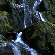 Land of 1000 Drips, Roaring Fork Motor Trail, Great Smoky Mountains National Park, Tennessee