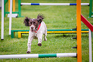 Midlands Fun Dog Day 2016