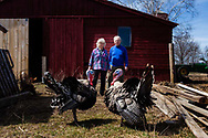 Christine and Bruce Balch pose with two of their Narragansett turkeys at Bunten Farm in Orford, N.H., on April 20, 2014. The couple is looking to subdivide their nearly 200-acre farm to create two smaller housing lots along Grimes Hill Road. (Valley News - Will Parson)