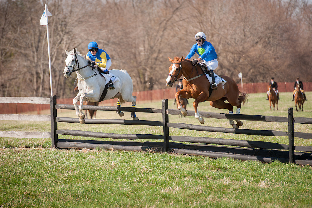 Race horses with jockeys jumping over a fence at the Manor Races in Monkton, Maryland
