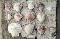 Seashells On Weathered Cardboard