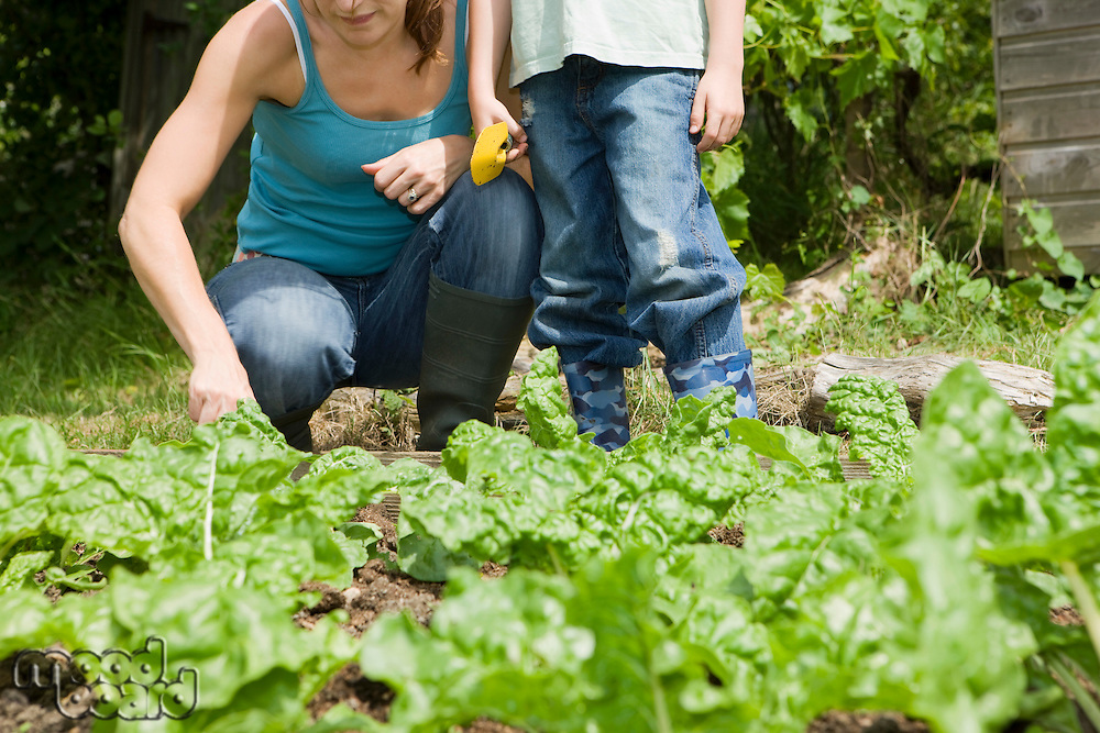 Boy gardening with mother low section