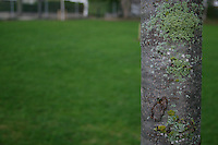 Close up of moss covered tree bark in the winter at public park in Dublin Ireland