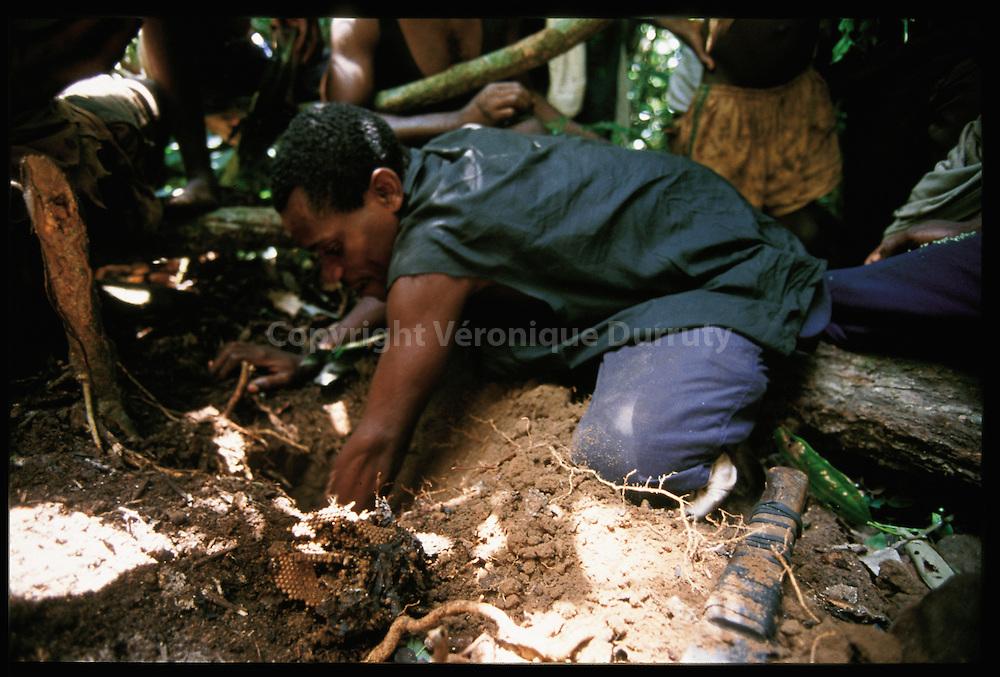 Men  looking for wild honey in a ground neast..Homme recoltant du miel dans un essaim souterrain