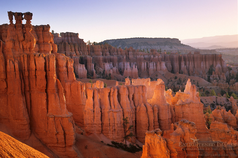 Sunrise light on hoodoos, from the Navajo Loop Trail, Bryce Canyon National Park, UTAH