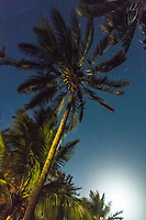 Palm trees in the moonlight, Mombasa, Kenya