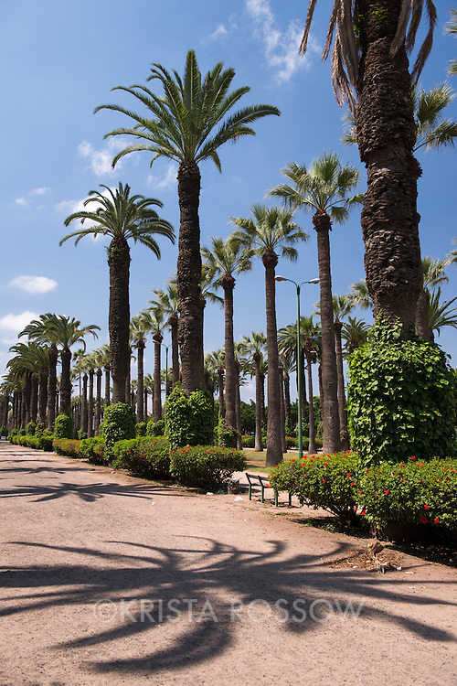 Palm trees and their shadows line the pathways at the Parc de la Ligue Arabe in Casablanca, Morocco.