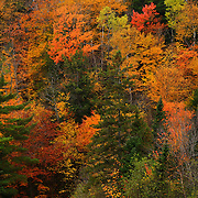 """Autumn Melange""<br />