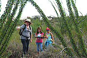 Pamela Pelletier, (left), leads students from Drachman Elementary School on a cactus count at the Desert Laboratory at Tumamoc Hill at the University of Arizona, Tucson, Arizona, USA.