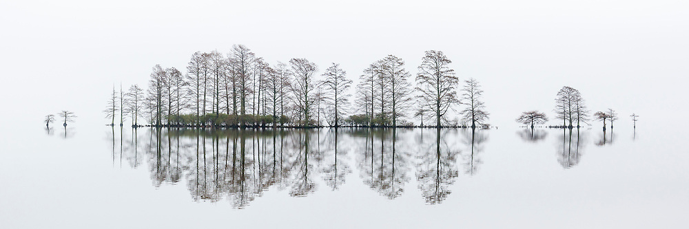 Here is a photograph of a cypress tree Island in dense fog at Lake Mattamuskeet in eastern North Carolina. The fog was so thick you could not see the horizon. Lake Mattamuskeet Is the largest lake in North Carolina. This is my 2nd ever panoramic shot. I shot this on a tripod and and tried to level the camera up as much as possible. I used manual focus and exposure so the different photos would match up. I imported them into Photoshop from Lightroom using the merge to panorama in Photoshop setting, it's easy. I hope to shoot a lot more panoramic images in the future.
