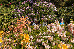 © Licensed to London News Pictures. 15/05/2019. WEXHAM, UK.  Visitors walk amongst the azaleas in bloom in the Temple Gardens of Langley Park.  A former royal hunting ground, Langley Park has links to King Henry VIII, Queen Elizabeth I and Queen Victoria.  Each year, masses of rhododendrons and azaleas bloom from March to June.  Photo credit: Stephen Chung/LNP