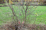 close up of the branches of roadside tree growth during late autumn season