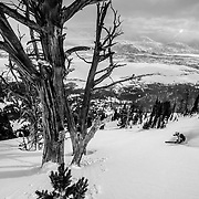 Tigger Knecht skis powder after a major winter storm in the Teton Range just outside of Jackson Hole Mountain Resort in Teton Village, Wyoming.