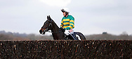 Barry Geraghty riding Regal Encore looks over the final fence before the start of the SIS Novices´ Chase at Plumpton Racecourse - 13 Dec 2015