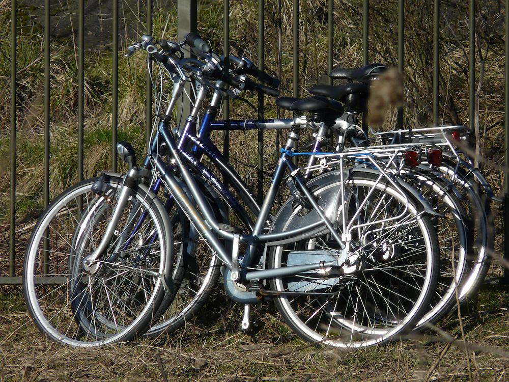 EN&gt; Bicycles parked by a fence in Mijnerswijk attest to the most used means of transport in Holland |<br /> SP&gt; Bicicletas estacionadas en una reja en Mijnerswijk dan testimonio del transporte m&aacute;s usado en Holanda